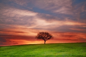 "Image courtesy of ""Lonely Tree"" by Evgeni Dinev, from http://www.freedigitalphotos.net"