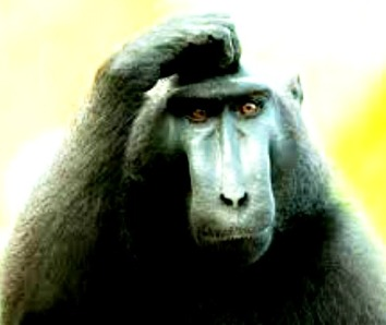 Monkey see, monkey do...