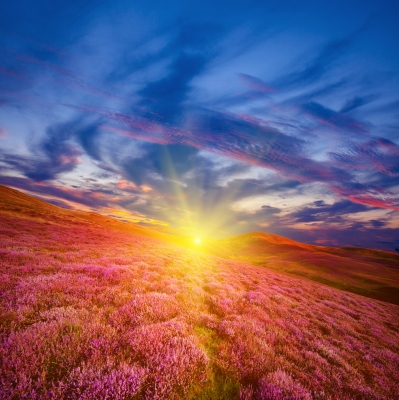 Image courtesy of Colorful Hill Slope Covered By Violet Heather Flowers by Serge Bertasius Photography, from http://www.freedigitalphotos.net